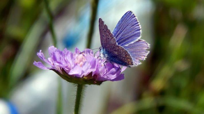 Bijen- en vlindertuin | Tips om meer bijen en vlinders naar je tuin te lokken