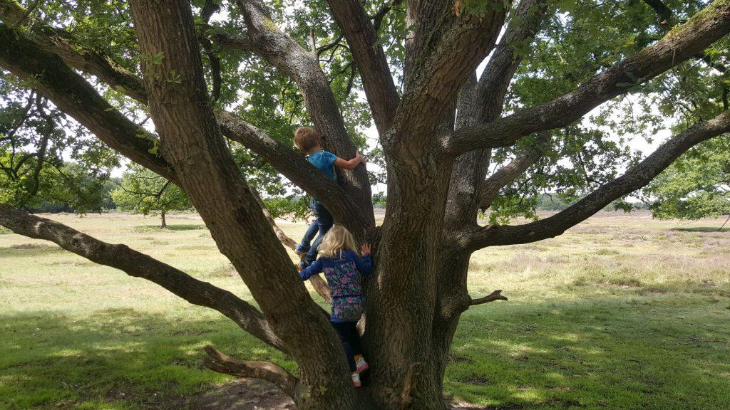 Klimboom Tafelbergheide