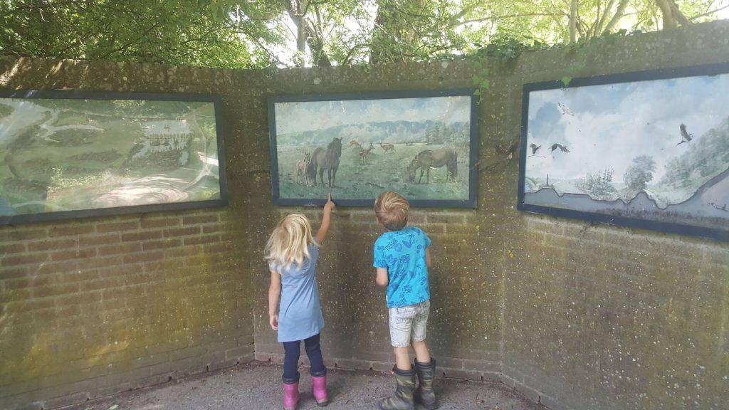 Natuurgebied de Blauwe Kamer Utrechts Landschap
