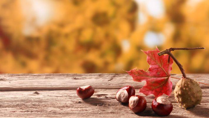 Kastanjes, wat kun je ermee: seizoenstafel, poffen, wasmiddel maken
