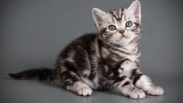Kittens, wat heb je nodig?